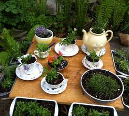 Make old crockery into planters