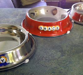 Customise your pet's dishes